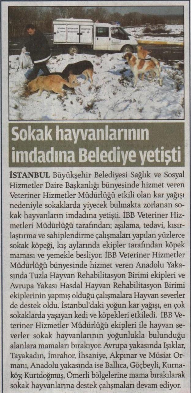 02.02.2012_milat_sokak_hayvan