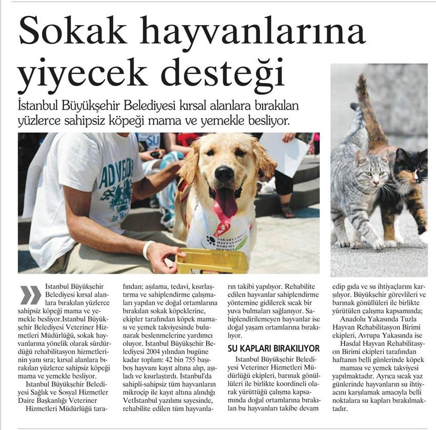 sokak_hayvanlari